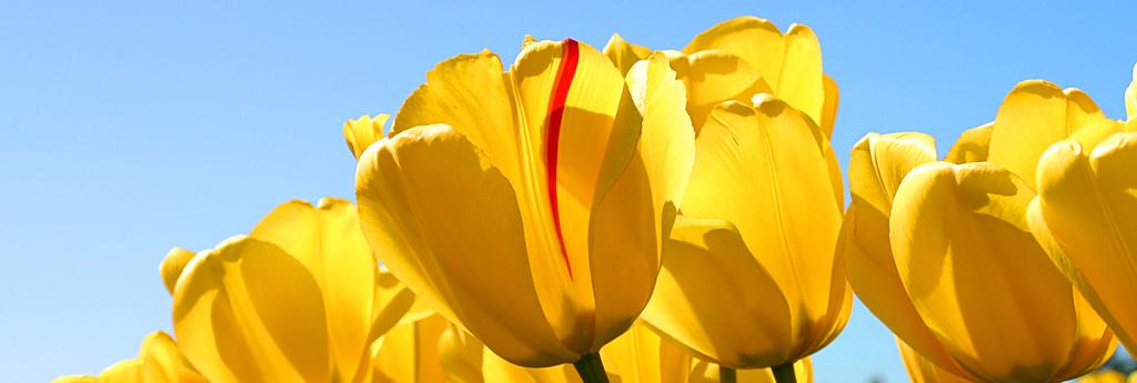 Frühlingsaktionen Insta